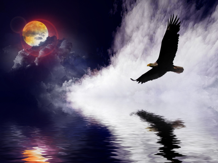 eagle in storm